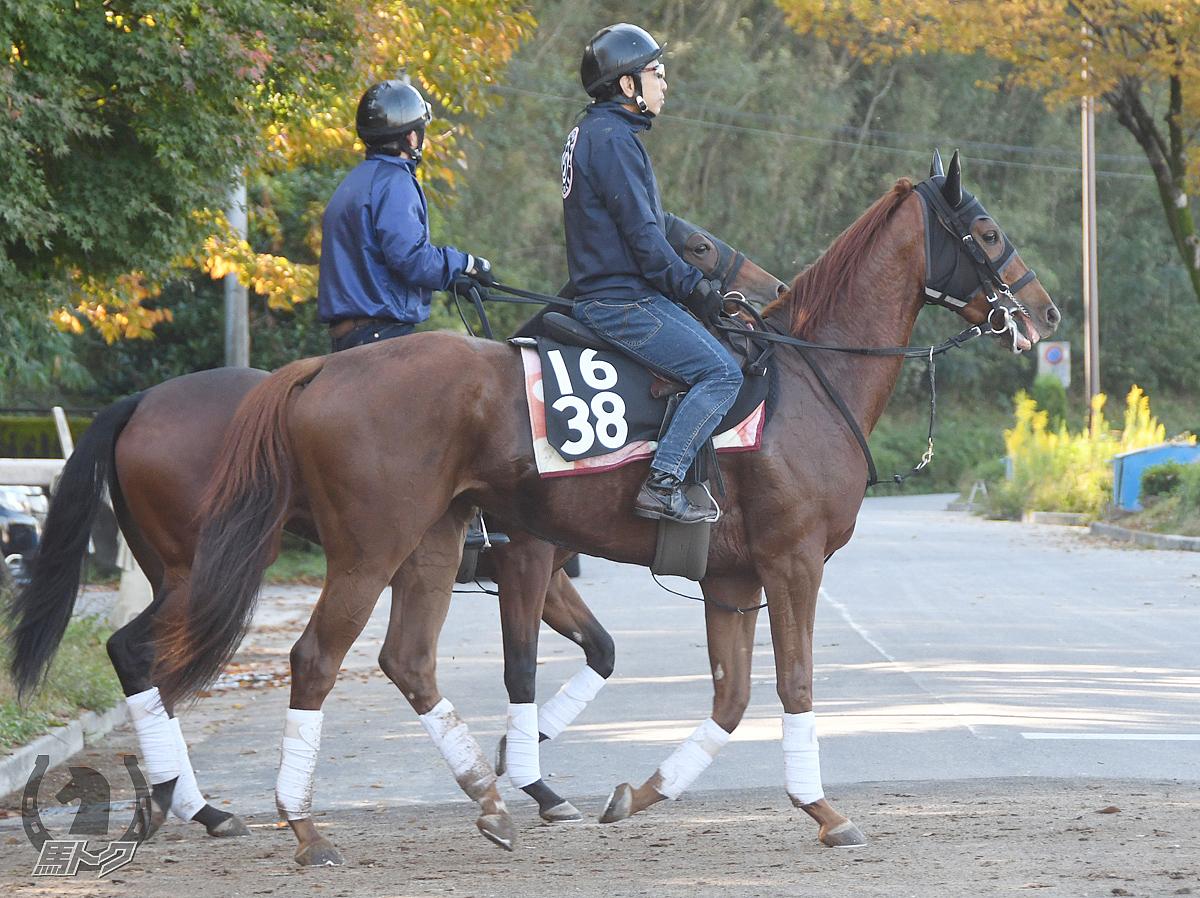 ピュアドリーマーの馬体写真