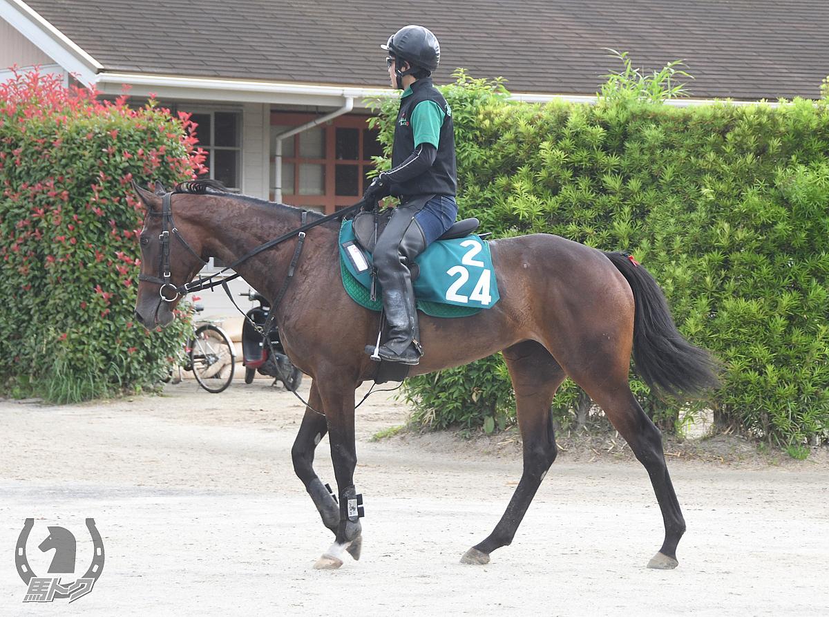 ニシノクローデットの馬体写真