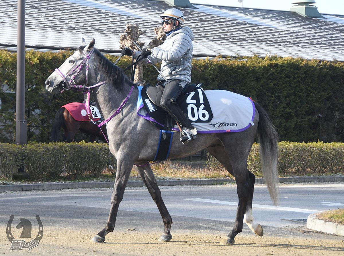 サスガハシャチョウの馬体写真