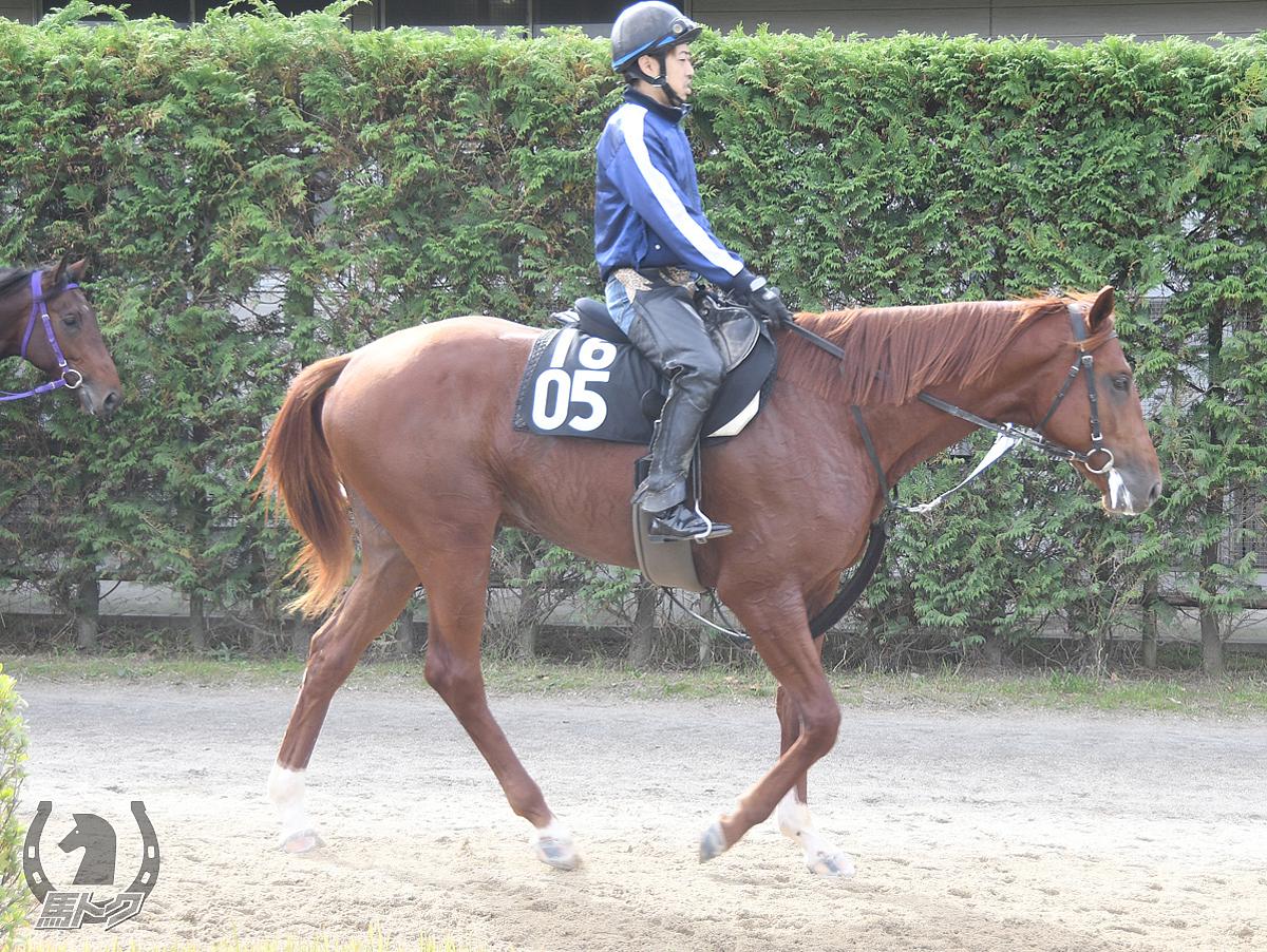 ブルベアブルーノの馬体写真
