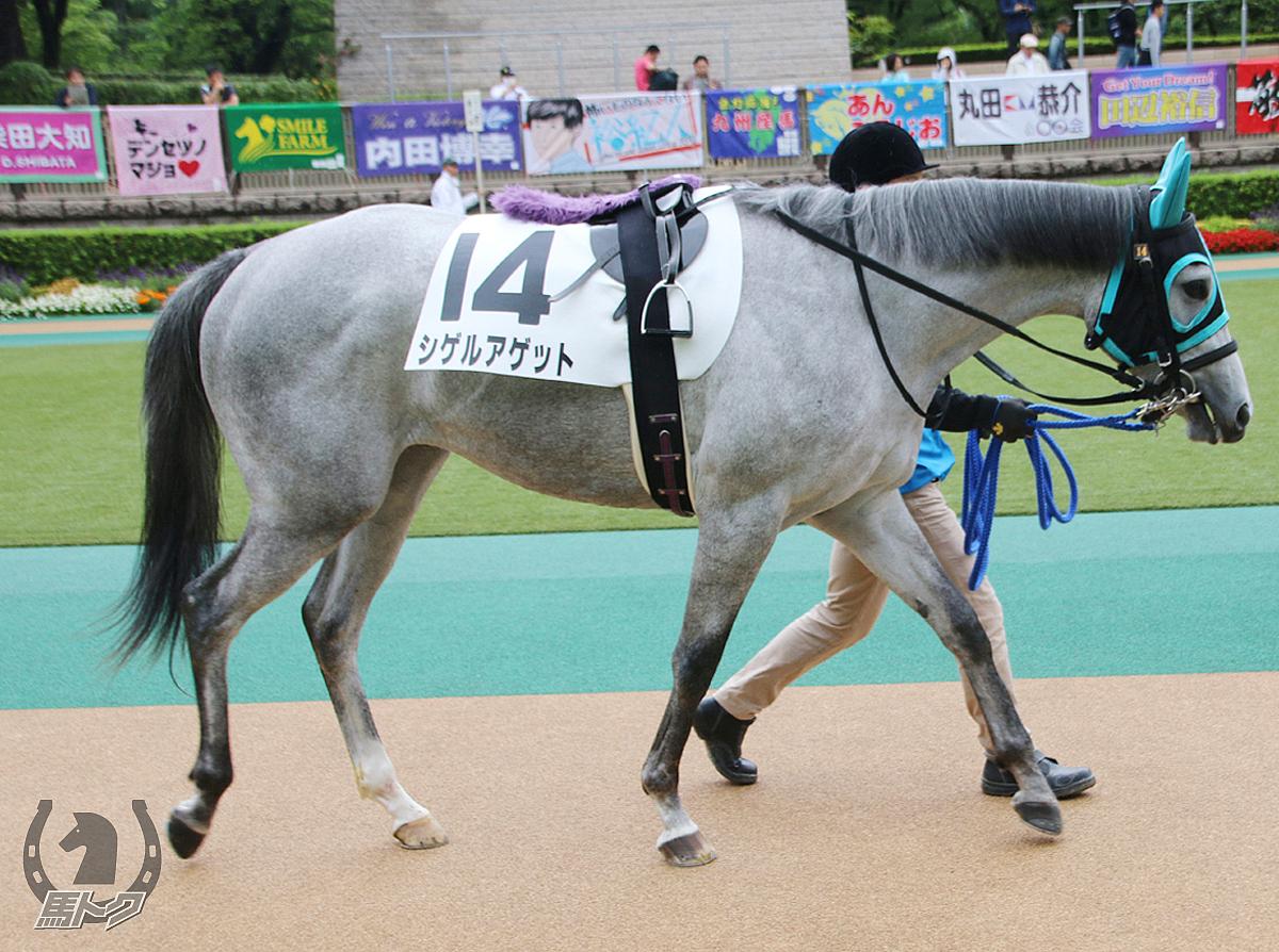 シゲルアゲットの馬体写真