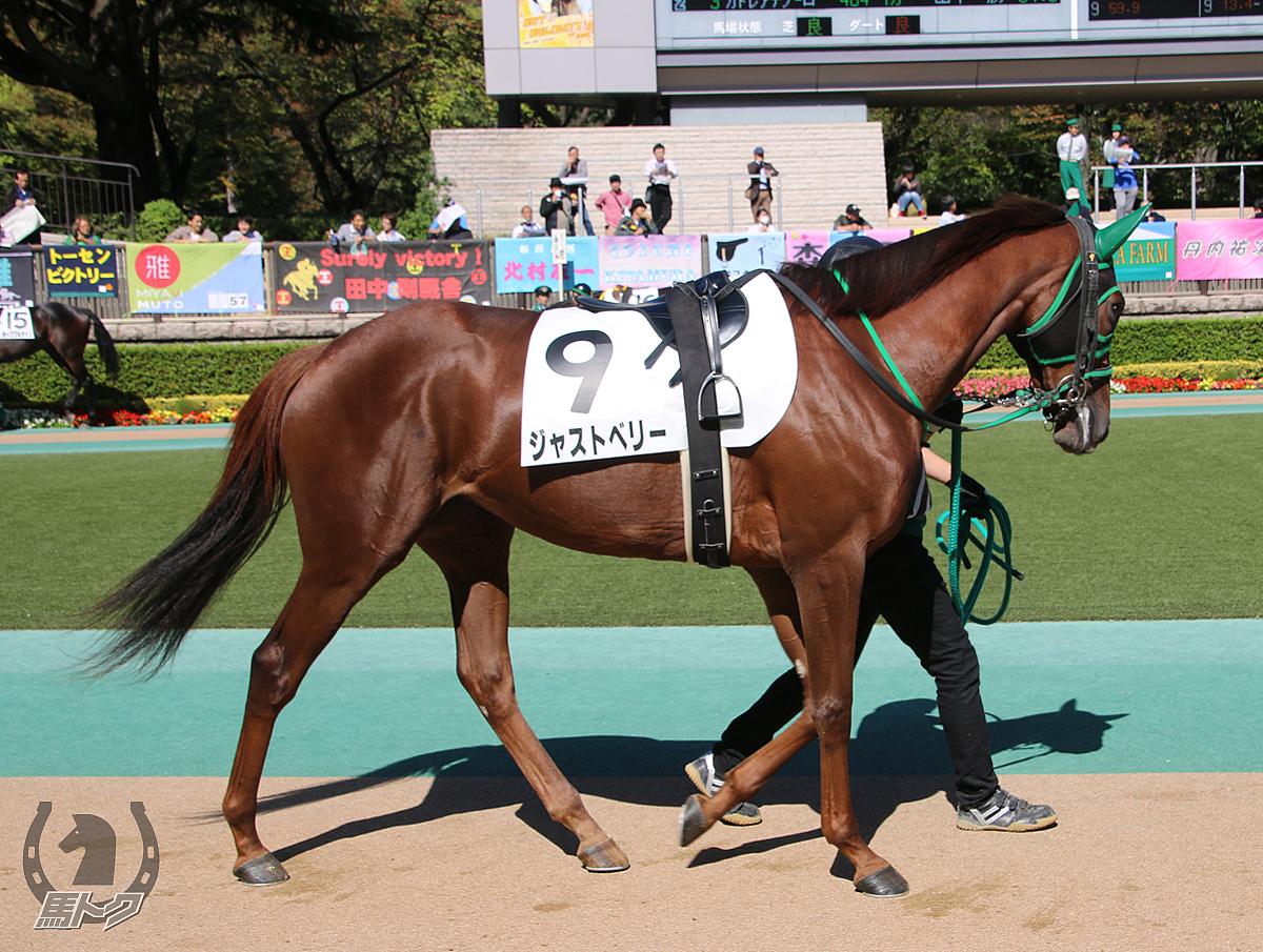 ジャストベリーの馬体写真