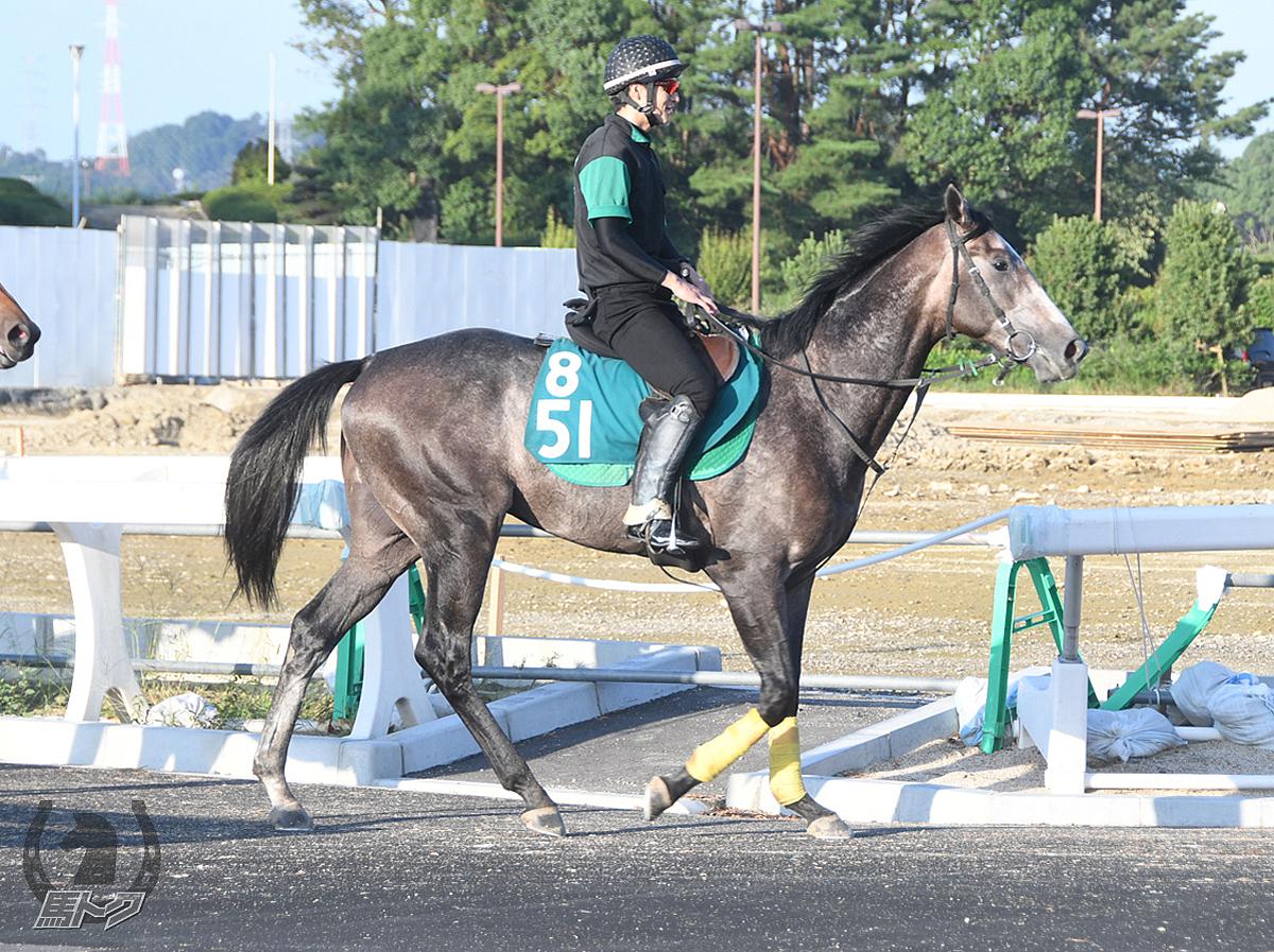 ヒッチコックの馬体写真