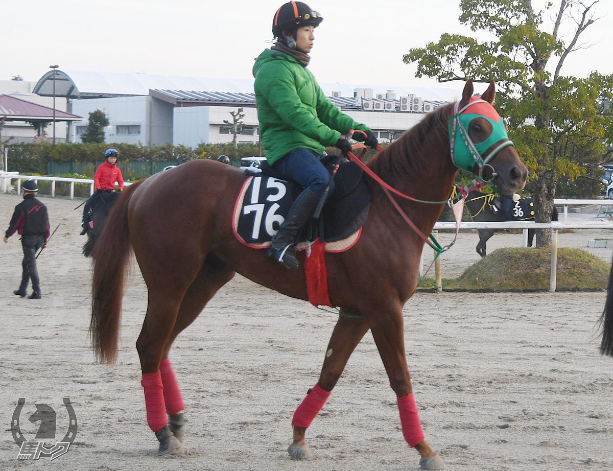 シゲルイエロダイヤの馬体写真