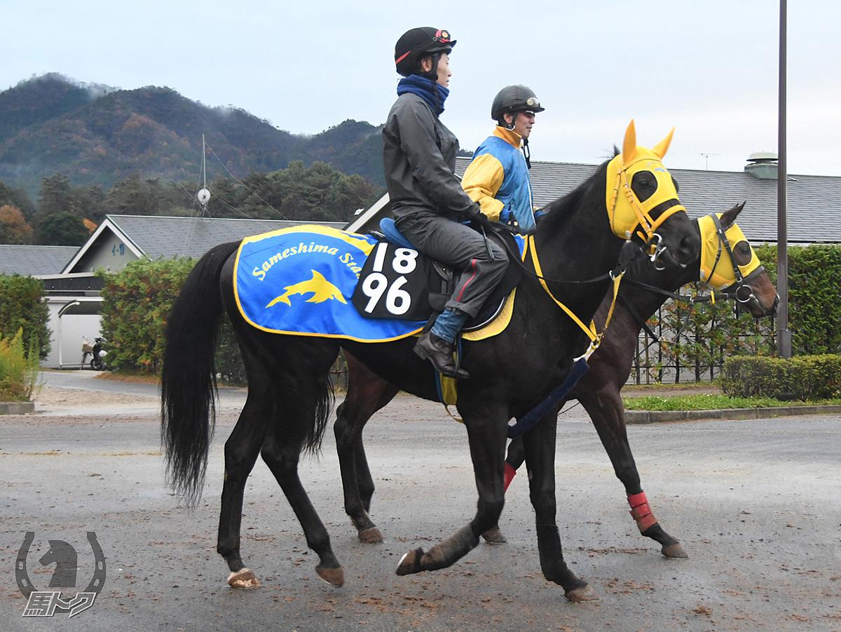 スマートモンスターの馬体写真