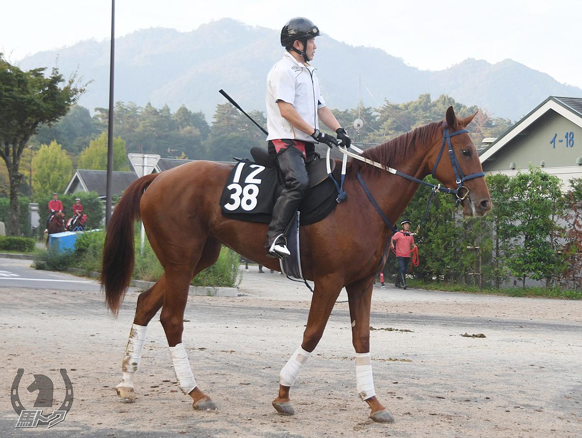ルリユールの馬体写真