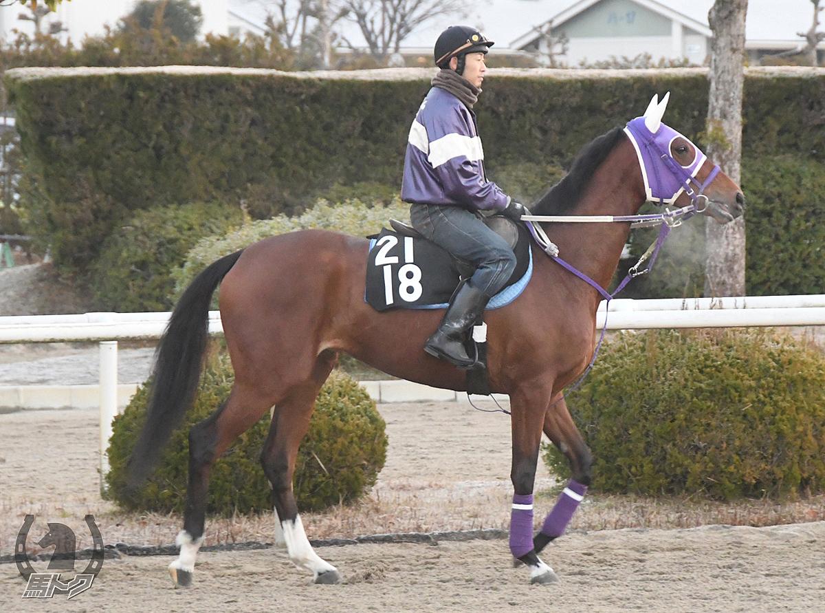 クレスコマリンの馬体写真