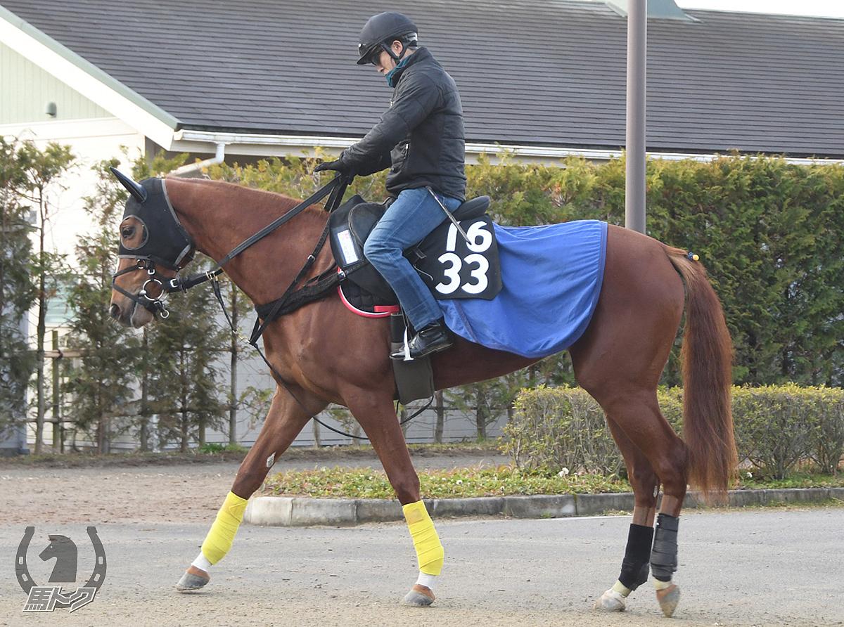 プレガリアの馬体写真