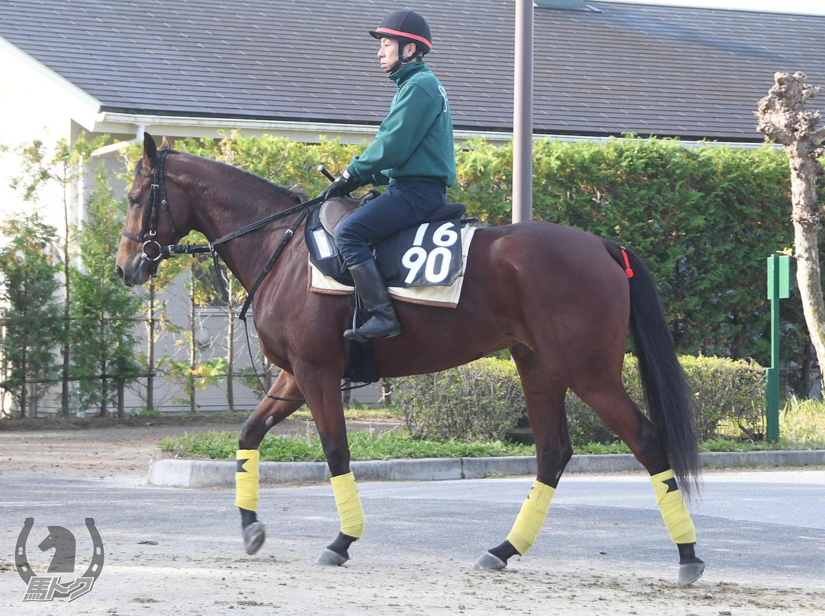ストラールの馬体写真