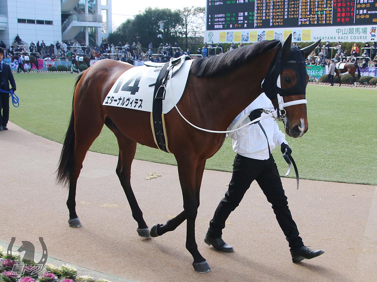 エターナルヴィテスの馬体写真