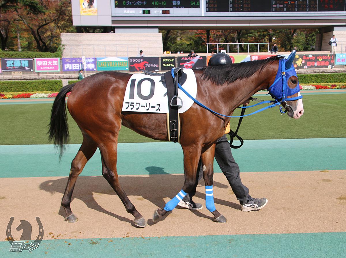 フラワーリースの馬体写真