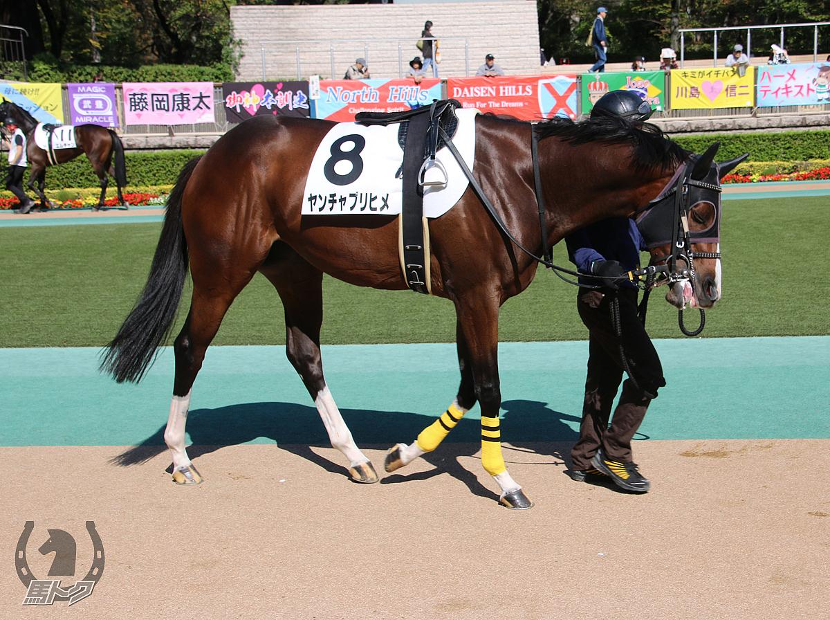 ヤンチャプリヒメの馬体写真