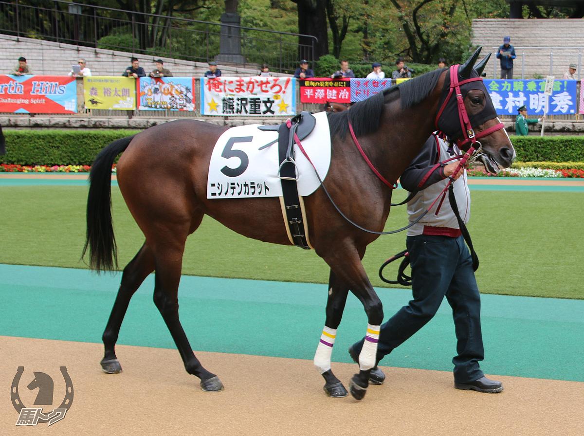 ニシノテンカラットの馬体写真
