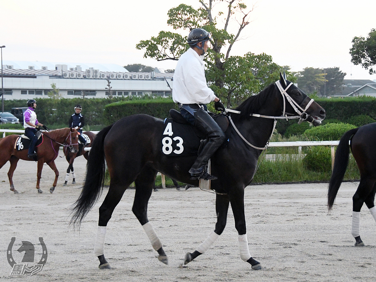 スカイノブランチの馬体写真