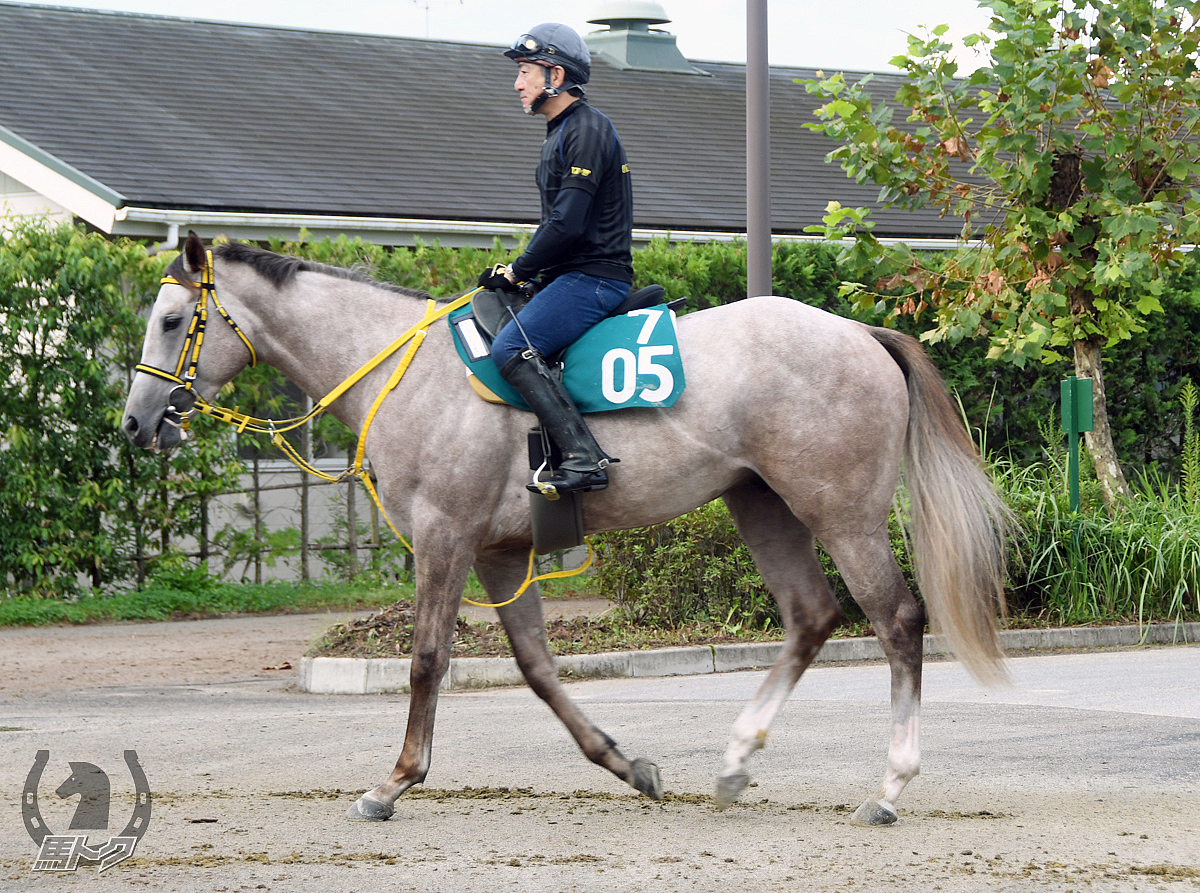 ウォーターマゼランの馬体写真