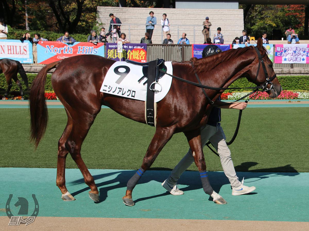 ニシノアレグロの馬体写真