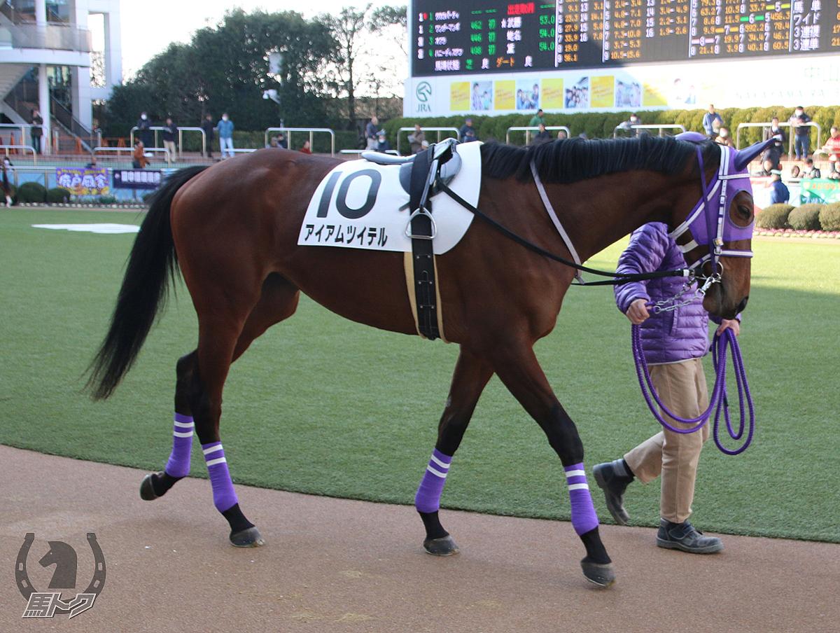 アイアムツイテルの馬体写真