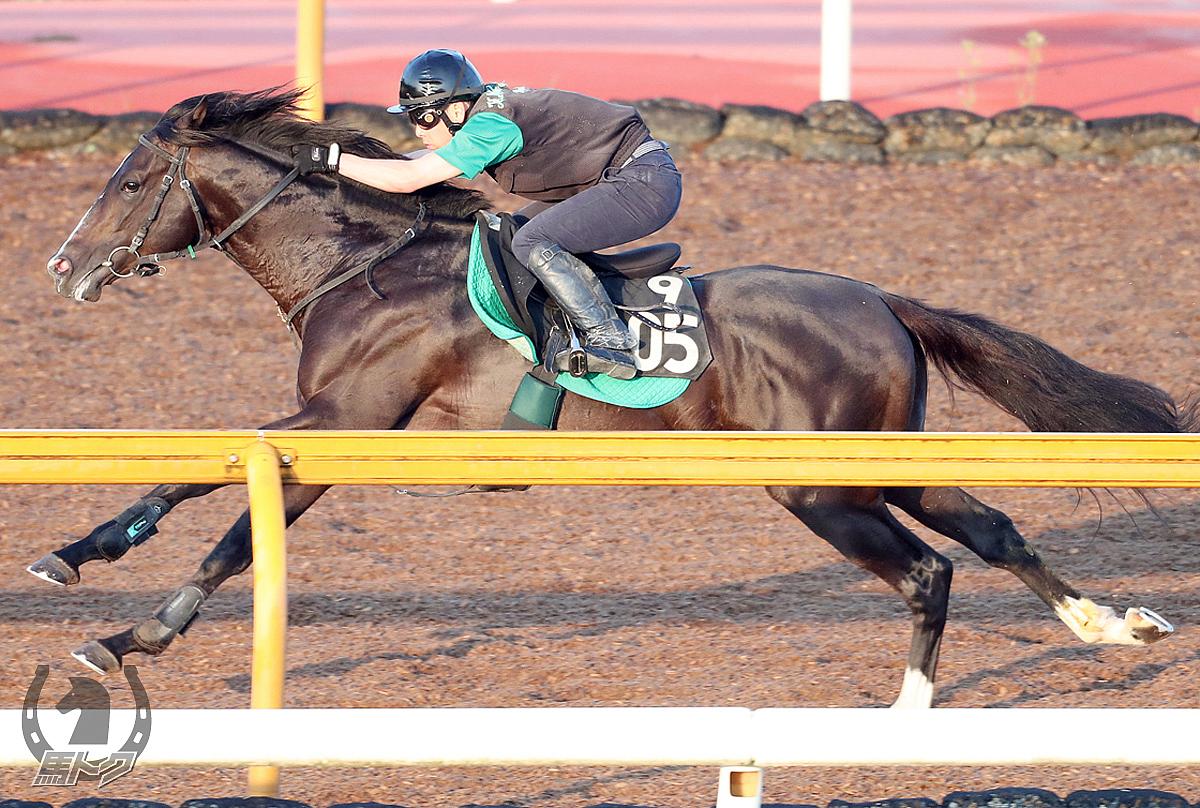 ブレイキングドーンの馬体写真