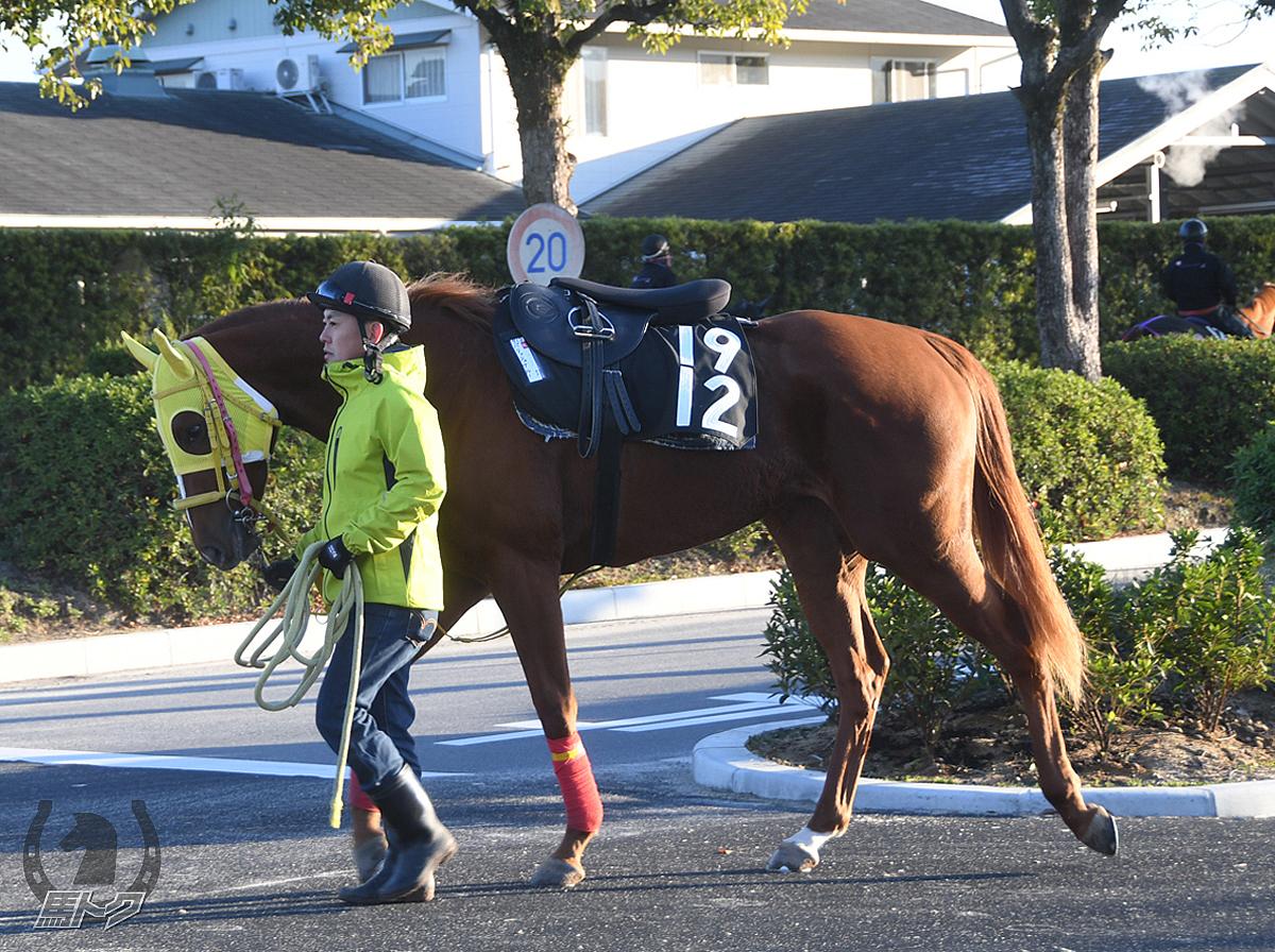 パリッシュブルーの馬体写真