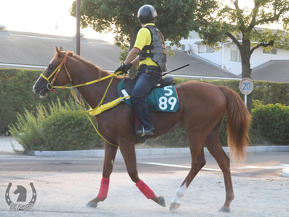 クリノライジンの馬体写真