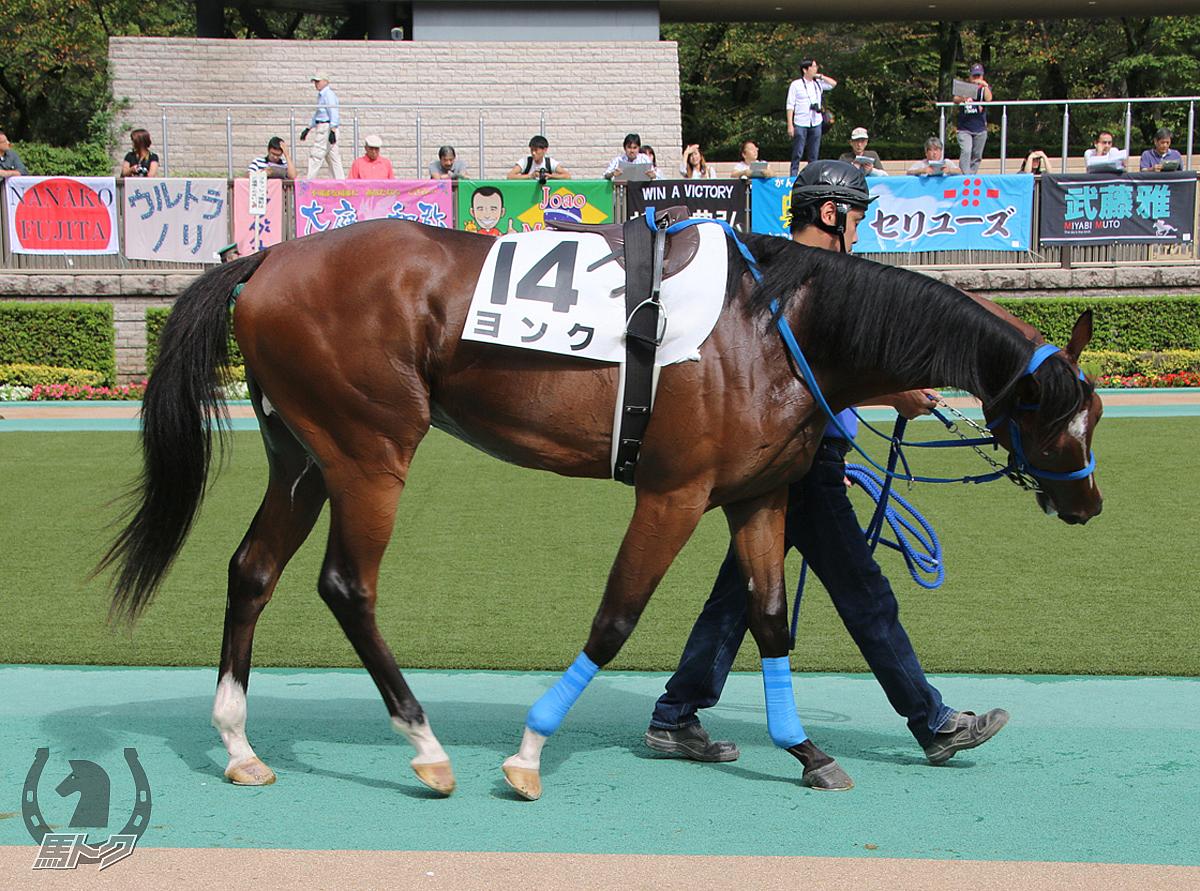 ヨンクの馬体写真