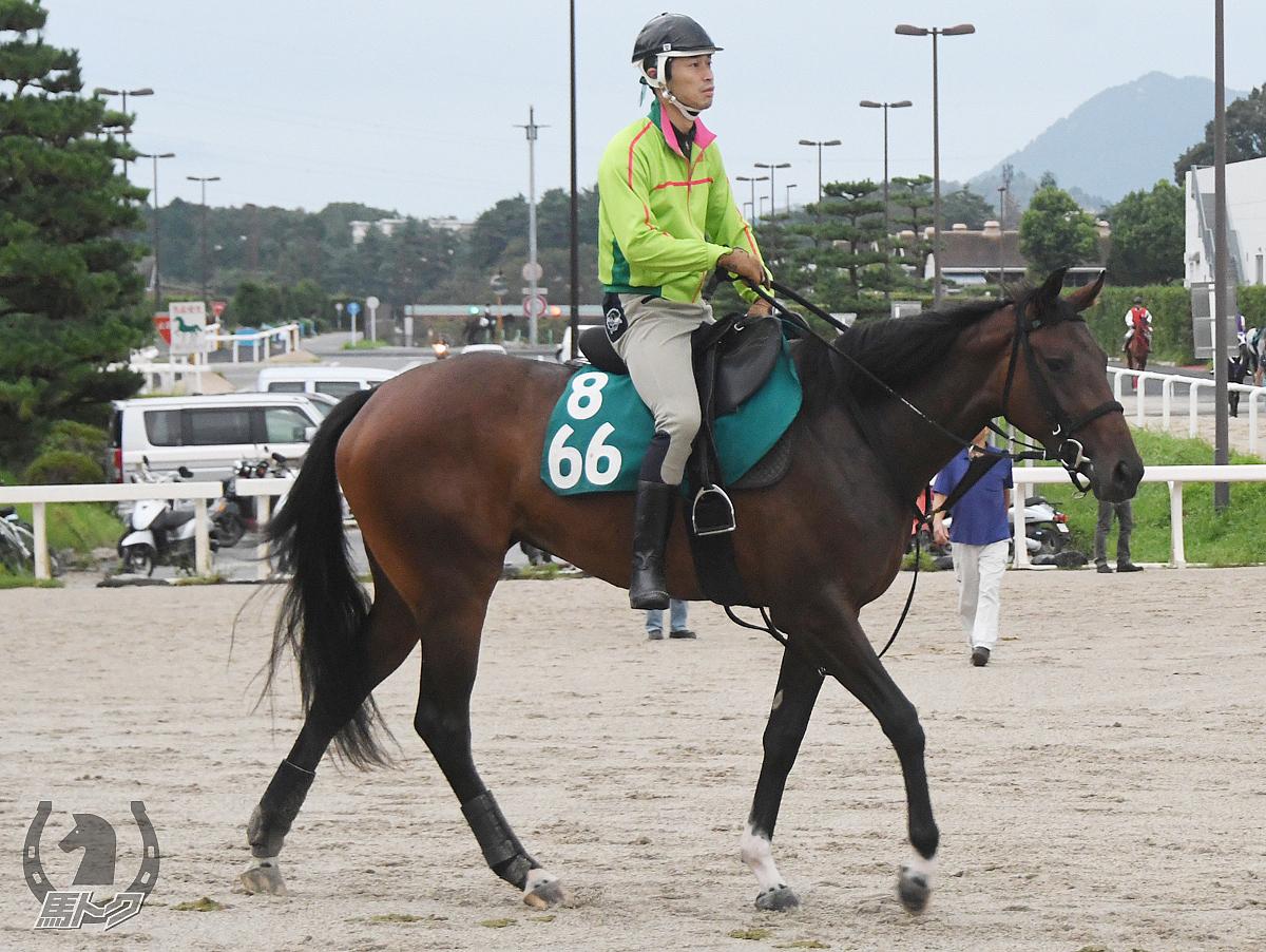 クリーンガーベラの馬体写真