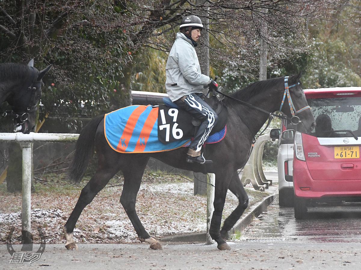 カズマッケンリーの馬体写真