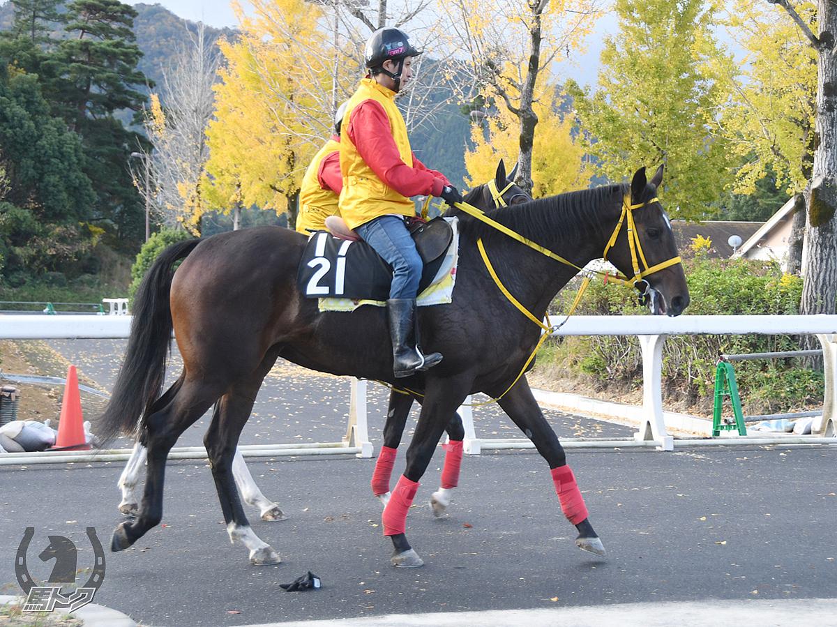 ルンルンクオリティの馬体写真