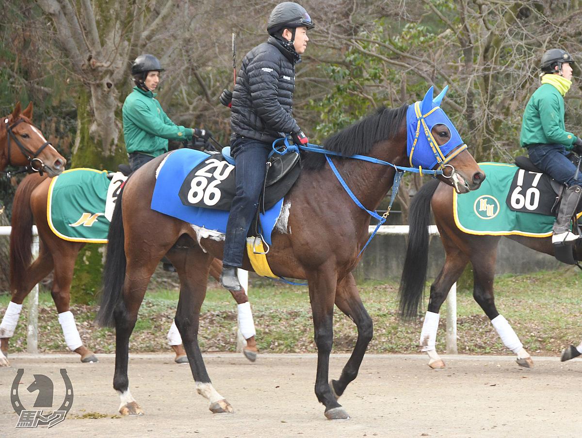メイショウクラマの馬体写真