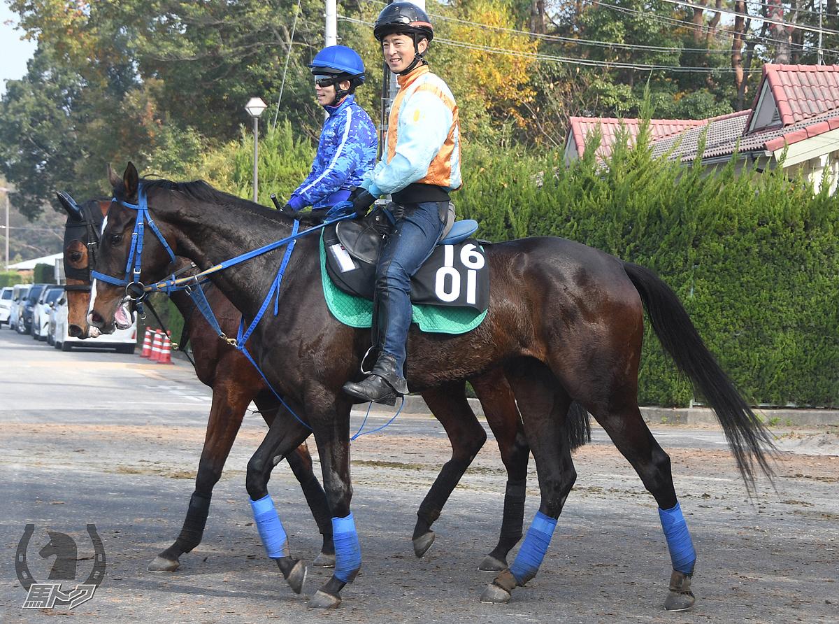 ノースカガヤキの馬体写真