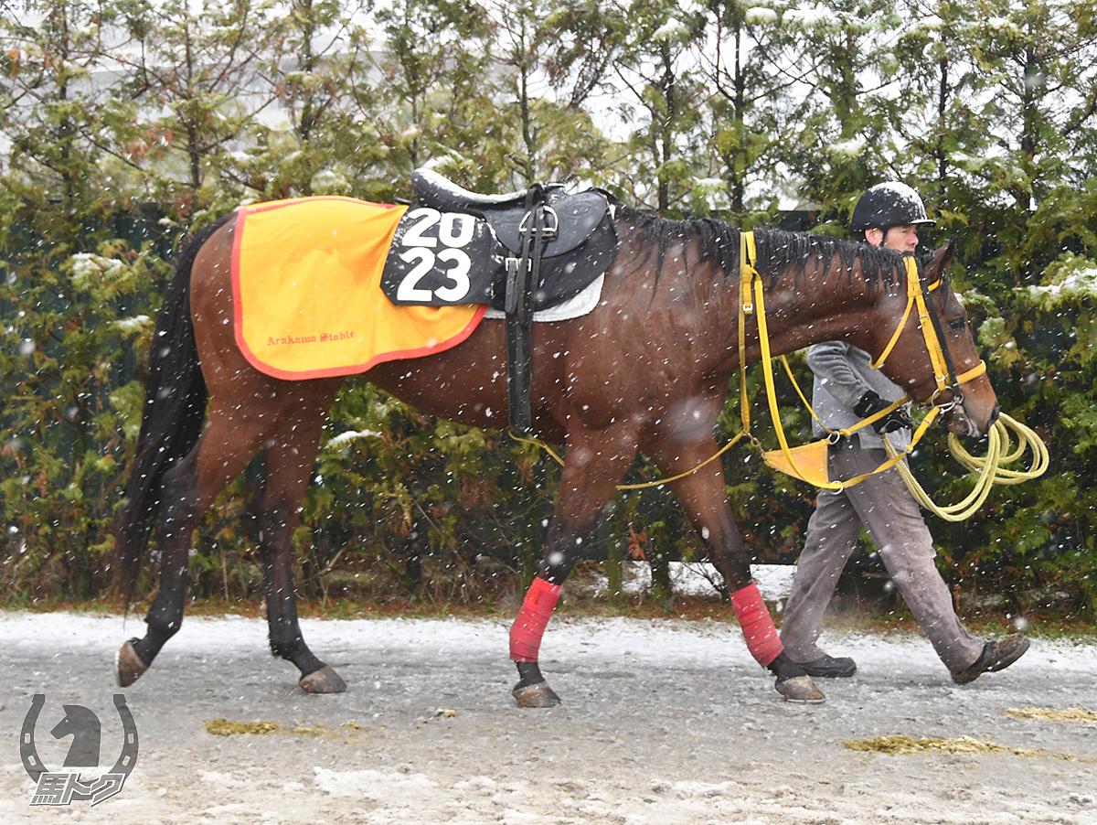 メイショウジガネの馬体写真