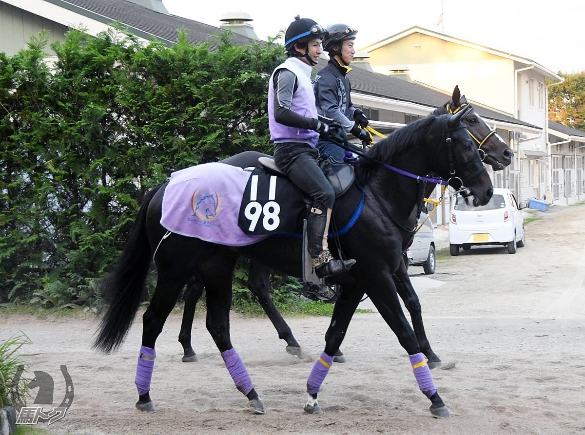 ロードワンダーの馬体写真