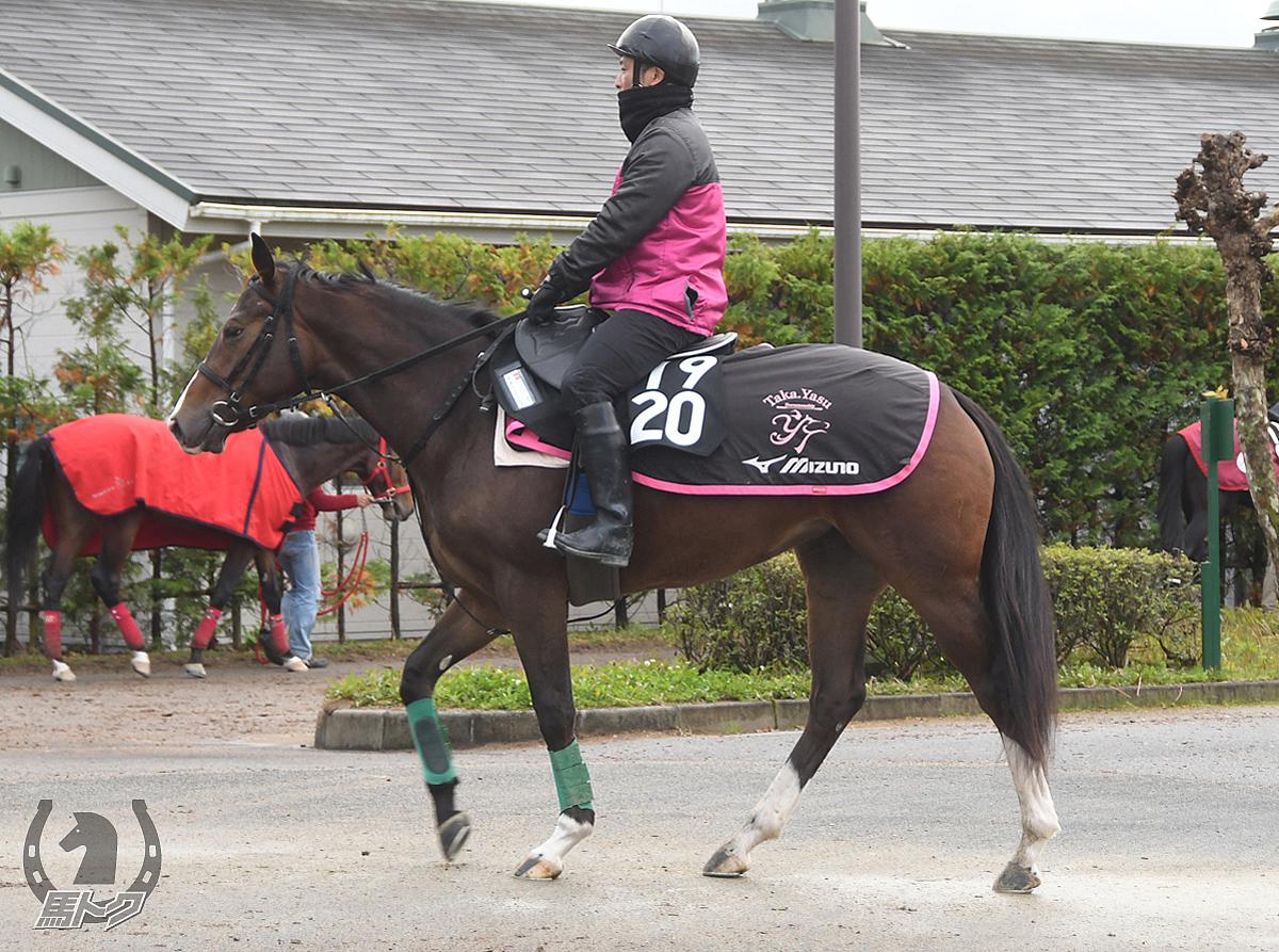 カネトシウイングスの馬体写真