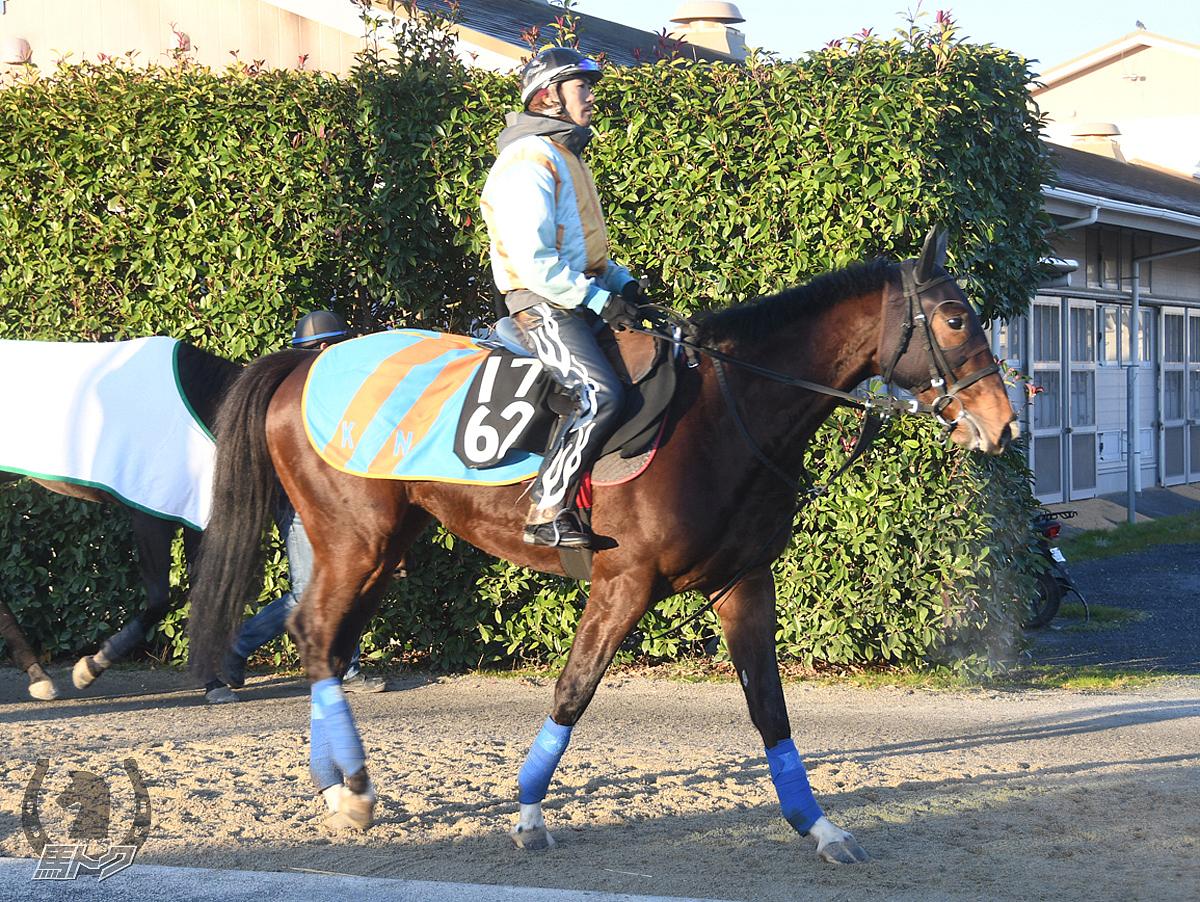 ホッコーメヴィウスの馬体写真