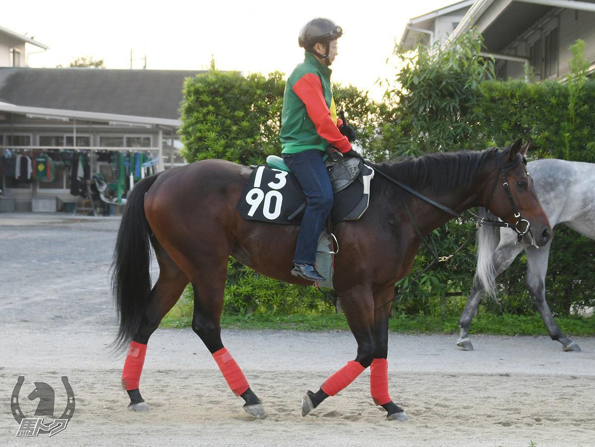 モズソノママの馬体写真