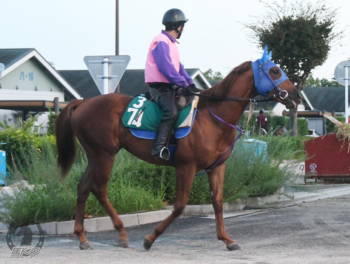 アルマオプティの馬体写真