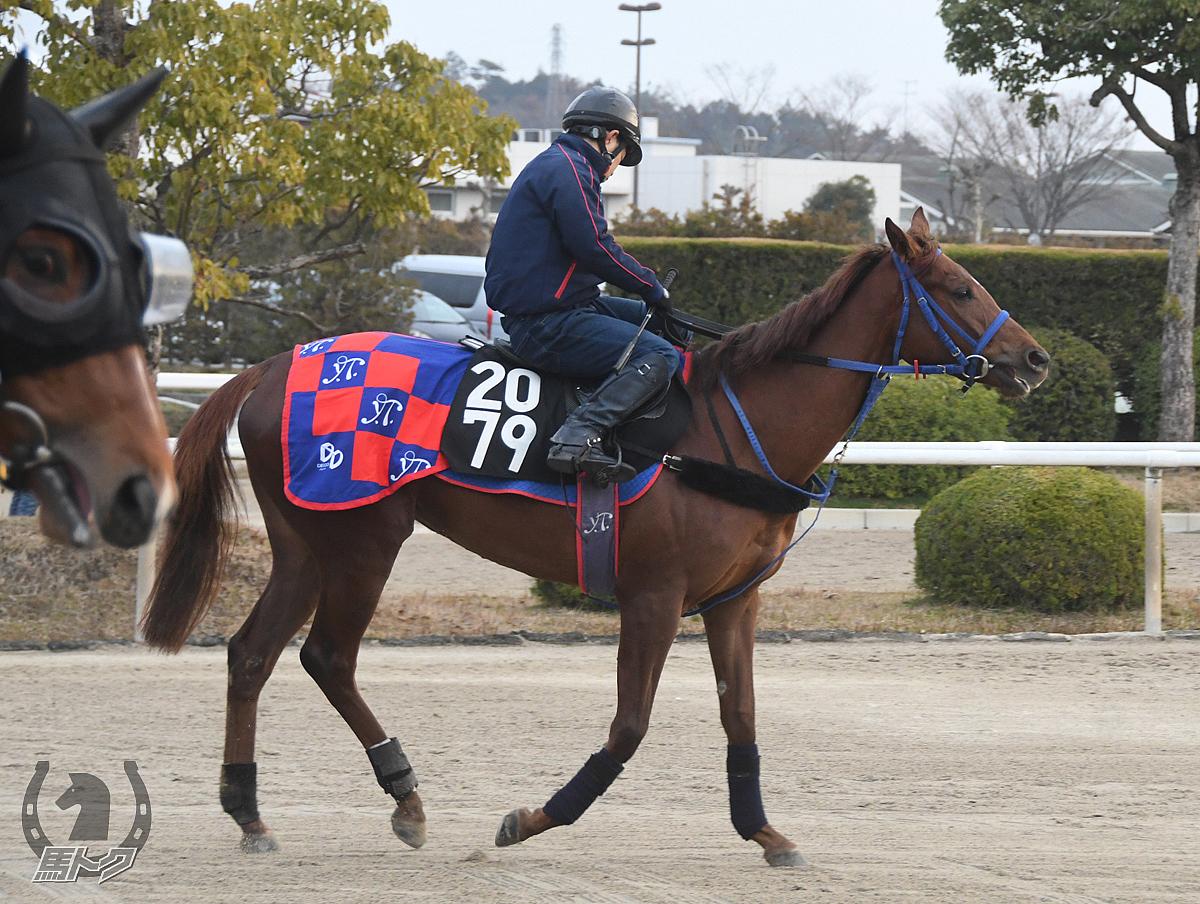 ヘルムヴィーゲの馬体写真