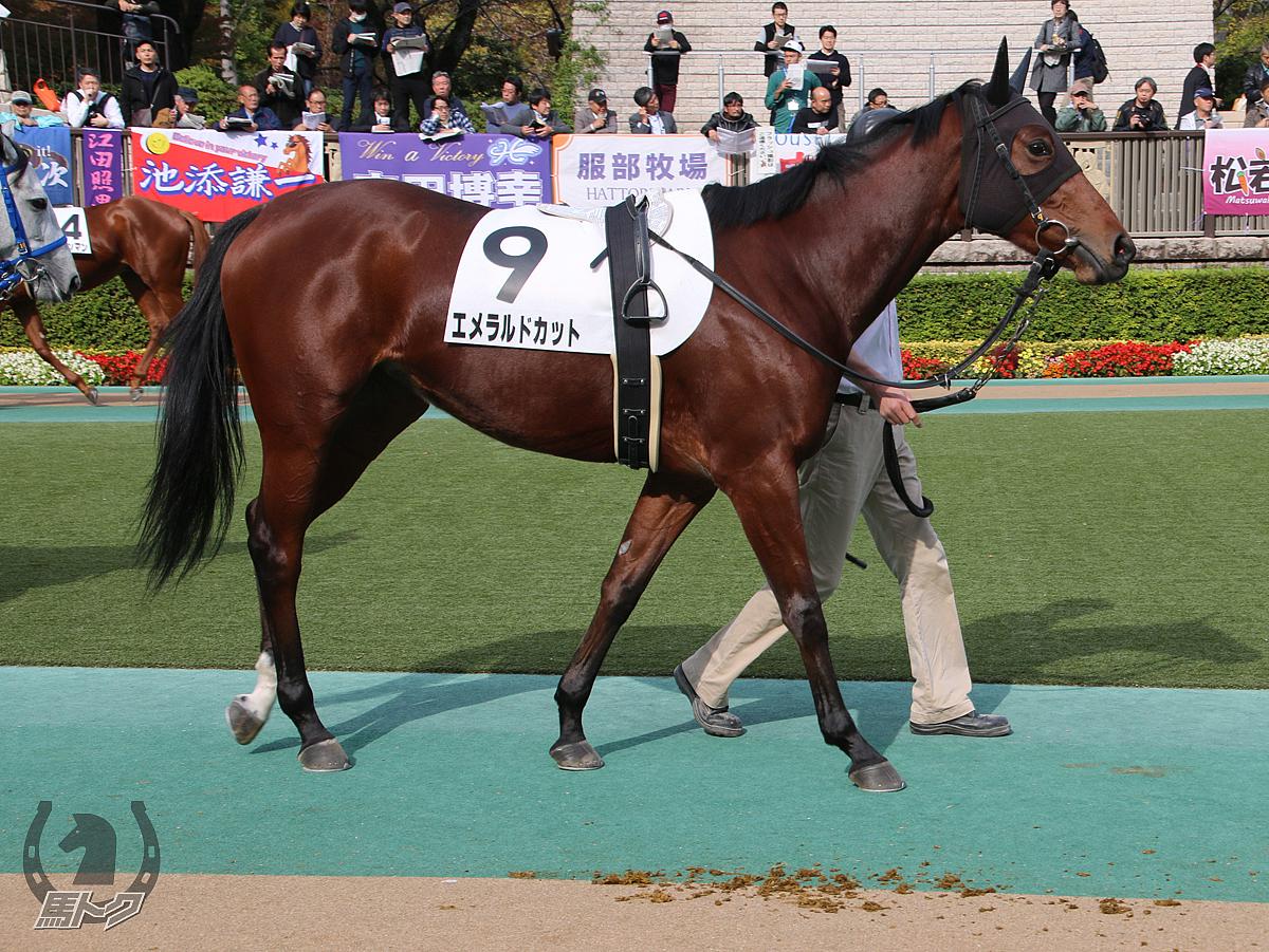 エメラルドカットの馬体写真
