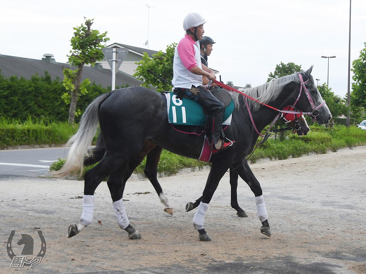 ジョートラジャの馬体写真