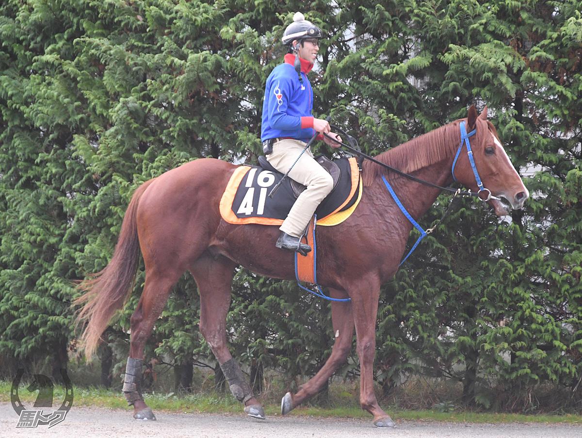 パープルルンルンの馬体写真