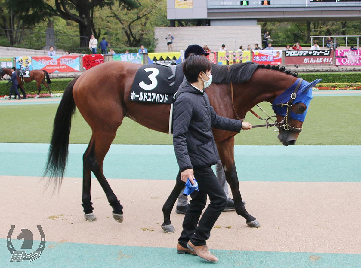 ホールドユアハンドの馬体写真
