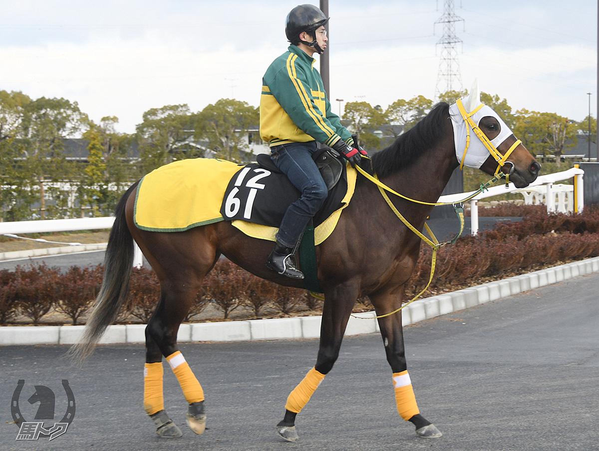 フェイクファーの馬体写真