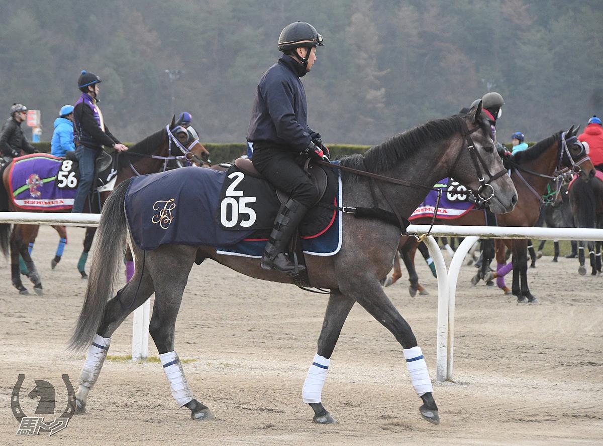 オースミヌーベルの馬体写真