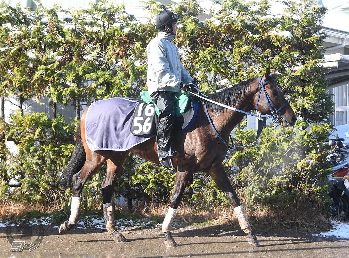 エルマスフエルテの馬体写真