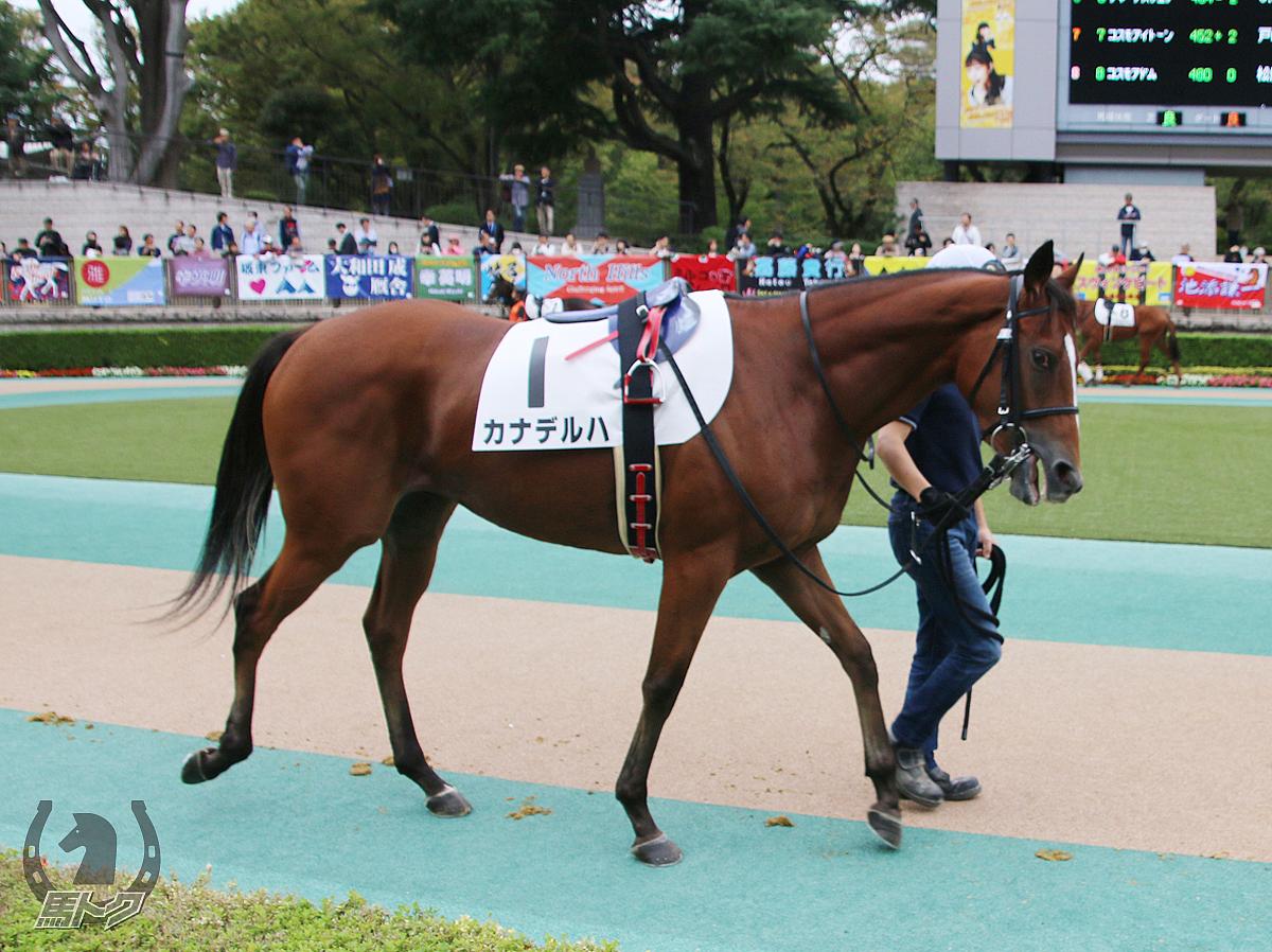 カナデルハの馬体写真