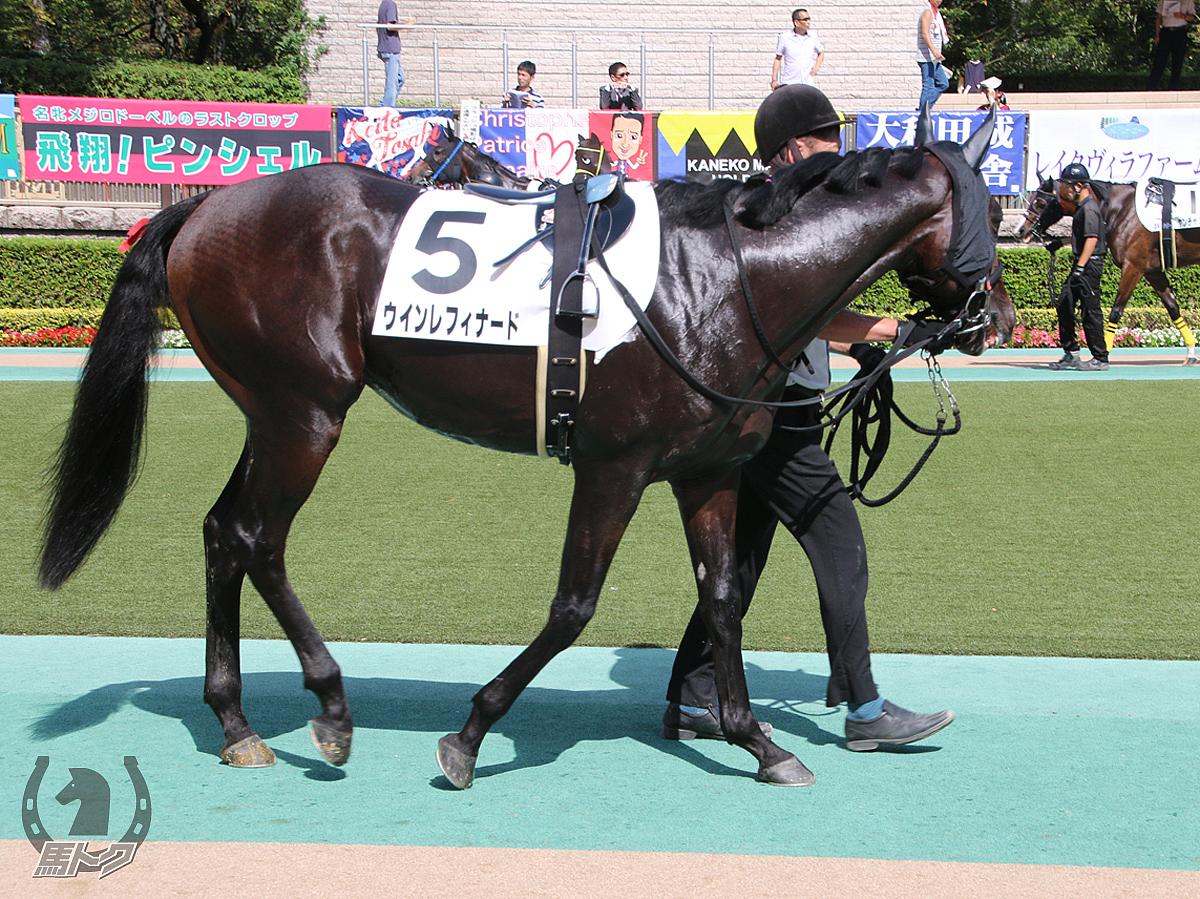 ウインレフィナードの馬体写真