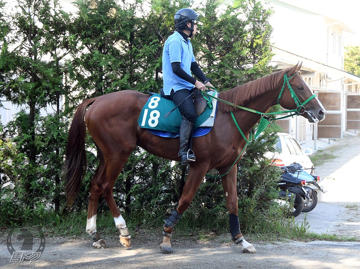 クリノソルアステカの馬体写真