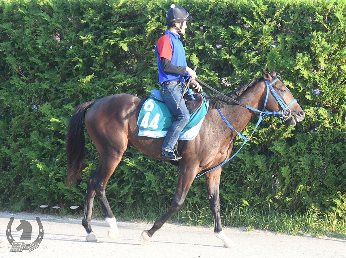 カシノアペックスの馬体写真