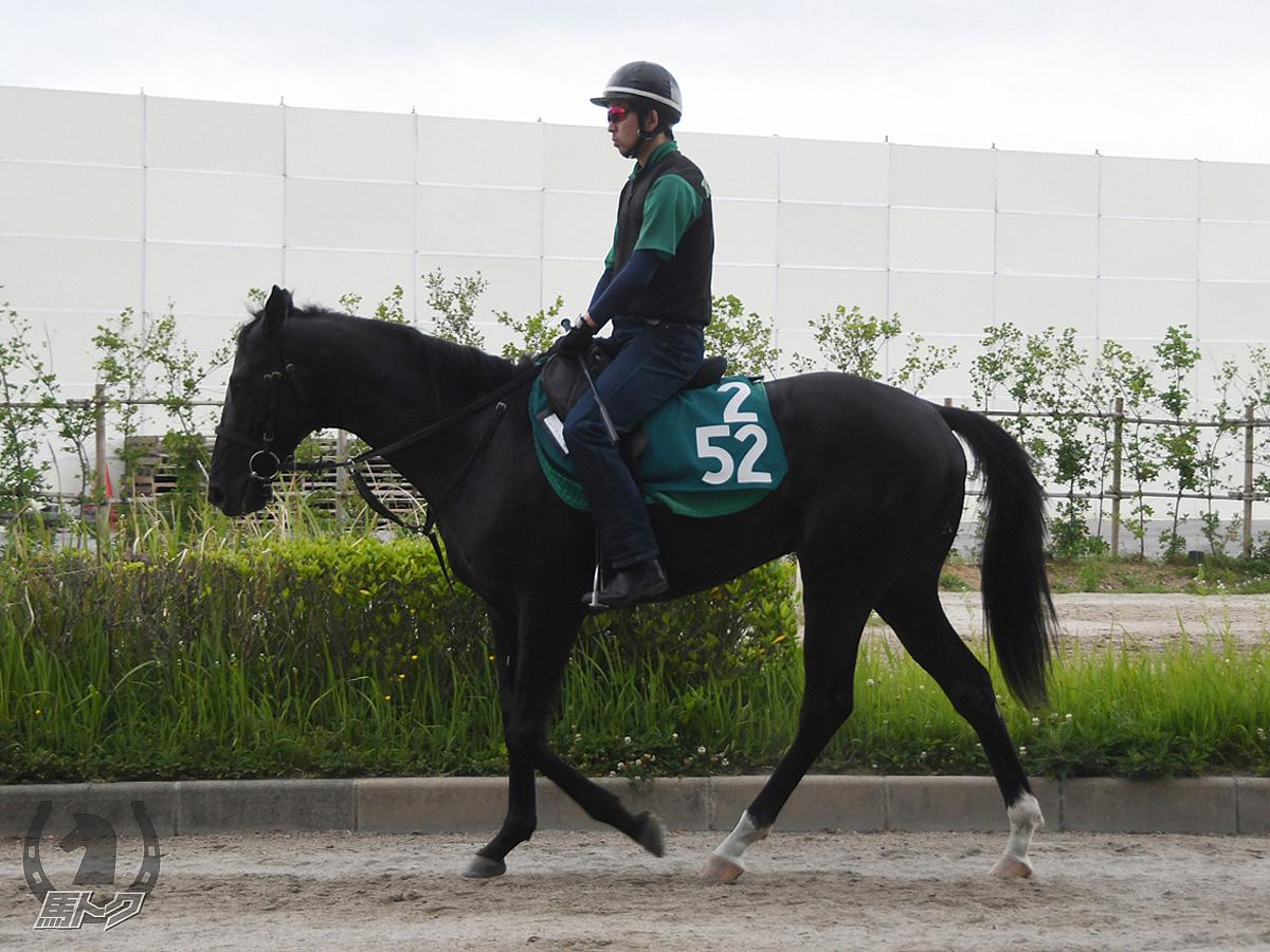 トップノッチの馬体写真
