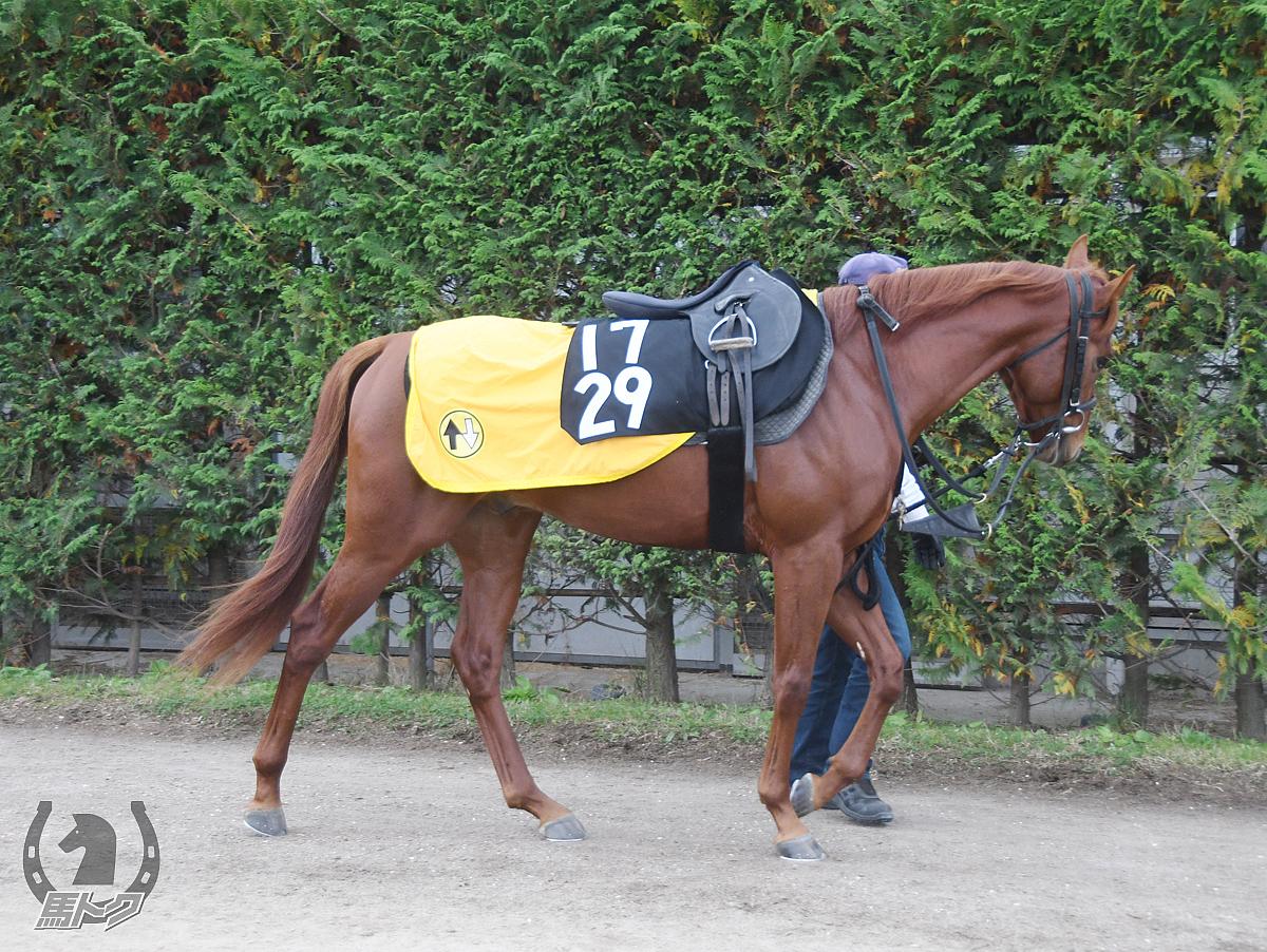 アノの馬体写真